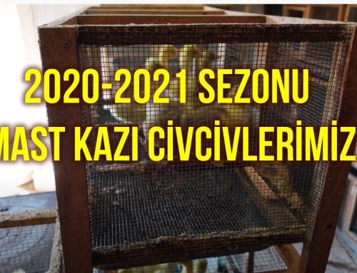 2020-2021 Sezonu Mast Kazı Civcivlerimiz